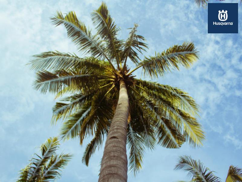 Cinco tipos de palmeras para decorar tu hogar