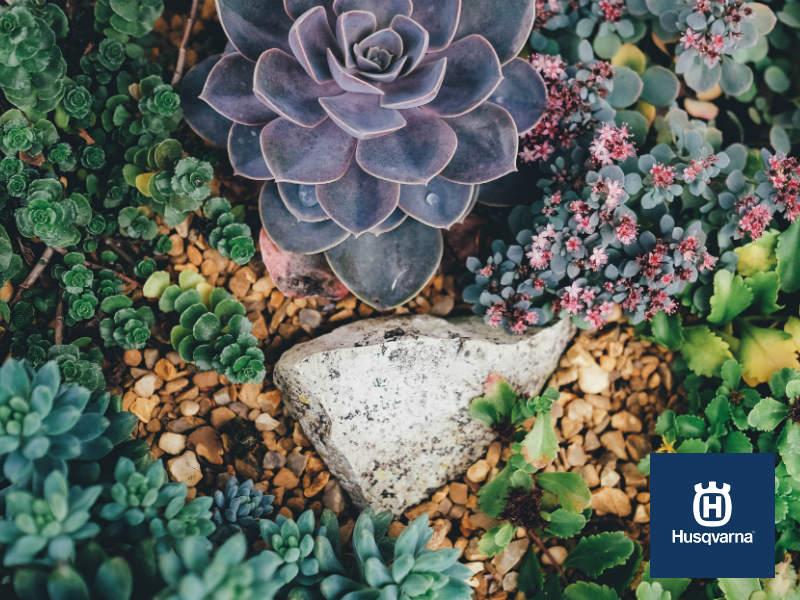 Decora tu casa con plantas crasas: resistentes, bonitas y fáciles de cultivar