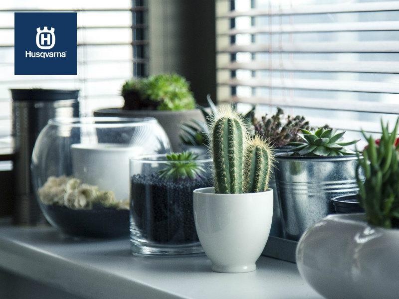 Descubre un nuevo concepto de decoración: plantas de interior