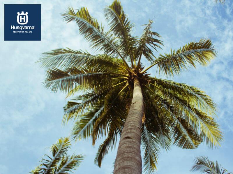 Cinco tipos de palmeras para decorar tu jardín