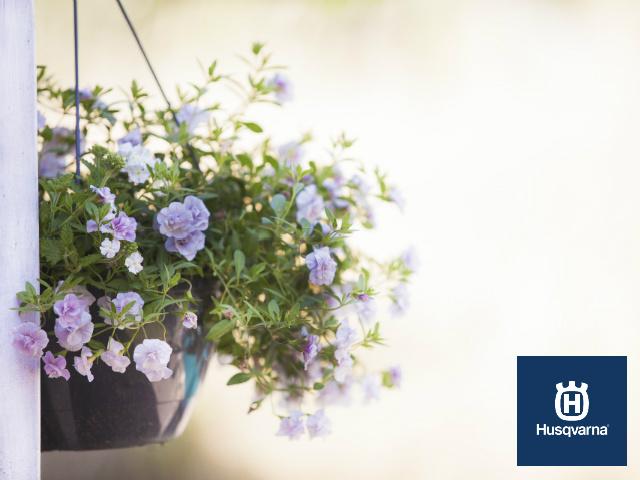 Plantas colgantes perfectas para la decoraci n interior y - Plantas colgantes interior ...