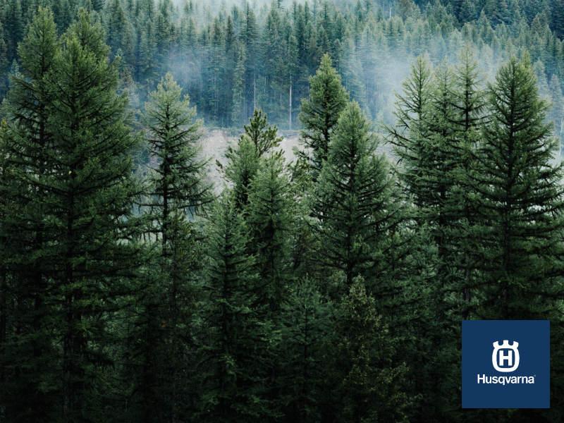 Todo lo que debes saber de la procesionaria del pino