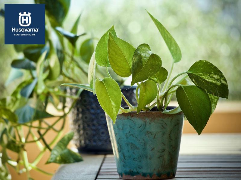 Pon un poto en tu casa, la planta colgante de interior